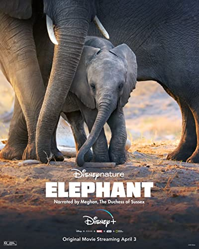 Watch Elephant Online