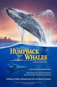 Watch Humpback Whales Online