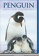 Watch Penguin Baywatch Antarctica Online